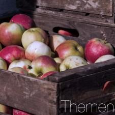 Apfelernte_Vorschaubild1